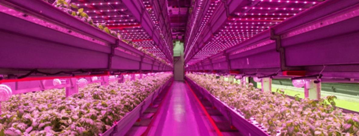 vertical-farming.png