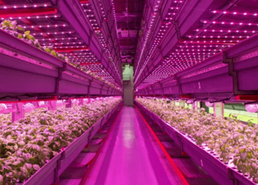 vertical-farming-2.png